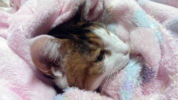 摂理猫20150102