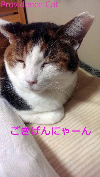 摂理猫201501201