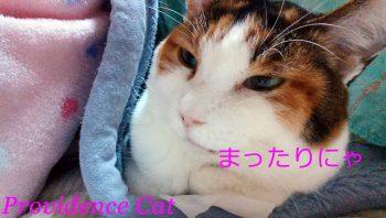 摂理猫20150205_3200621