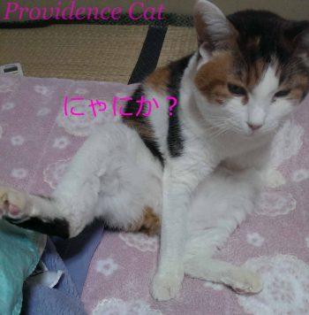 摂理猫201502102