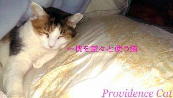 摂理猫20150214_3224712