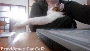 摂理猫 逮捕