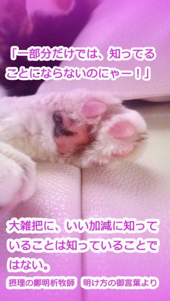 providencecat
