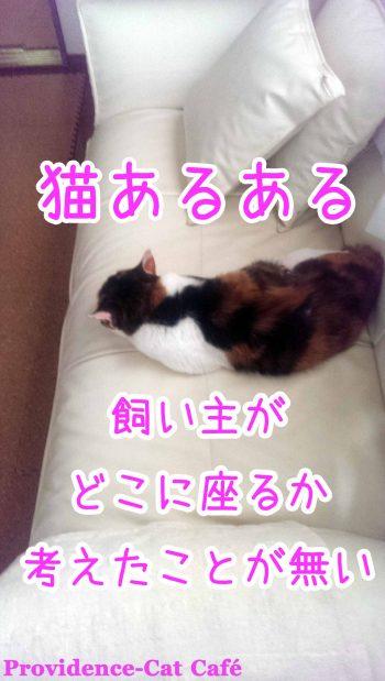 摂理猫あるある