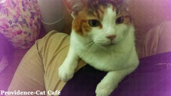 摂理猫さん