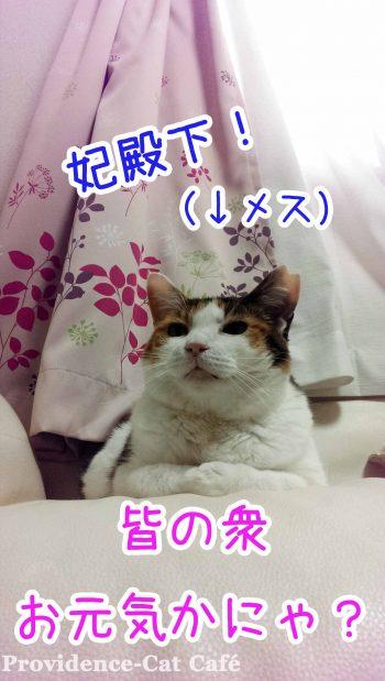 摂理猫は妃殿下だったらしい