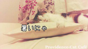 摂理猫の夏