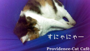 摂理猫とメンバー