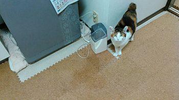 摂理猫とかつおぶし