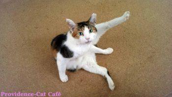 摂理猫の足