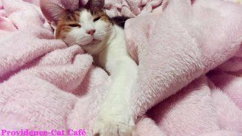 摂理猫2015103103