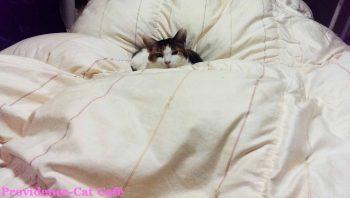 摂理猫メモリー144