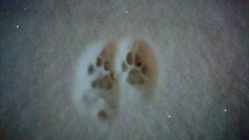 雪★猫の足跡
