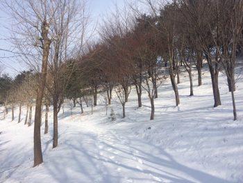 月明洞便り 雪と晴天4