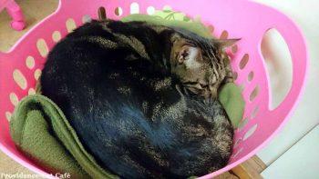 摂理猫二世