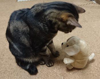 摂理猫VSぬいぐるみ