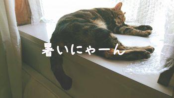 摂理猫二世暑い20160523