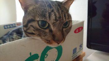 摂理猫二世と朝食