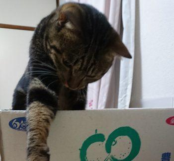 猫、飼い主の食べ物に手を出す