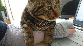 摂理猫二世重い