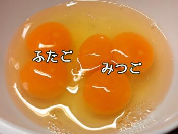 卵みつごふたご2021